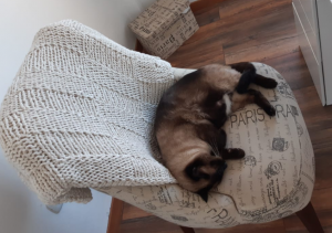 Sit uncomfortably on the edge of your chair so your cat can have a good nap